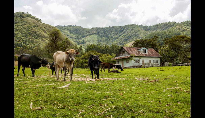 Fundos ganaderos, campos agrícolas y casas de estilo europeo hechas de madera son parte del paisaje de Oxapampa. (Foto: Antonio Escalante/PromPerú)